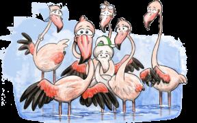 adopteer een flamingo